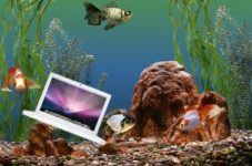 If Your Apple Mac Fell in Water